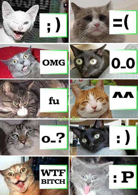 http://www.bezumnoe.ru/fun/catsmile.jpg