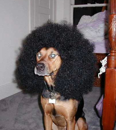 http://www.bezumnoe.ru/fun/dogs_hair.jpg